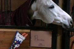 Christmas-morn-Phaedra